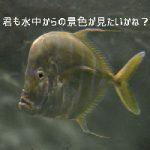 マツコの知らない世界のサブマリナーカメラ(潜水艦ラジコン)は海や川で使える?